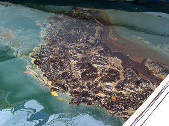 image of oil pollution